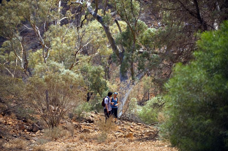 Flinders Ranges Walking Tour with Park Trek - Hikers taking a brief pause in the bush