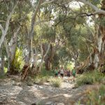Flinders Ranges Walking Tour with Park Trek - Hikers enjoying the canopy of trees