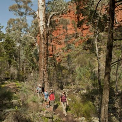 Flinders Ranges Walking Tour with Park Trek - Hikers negotiating a single track