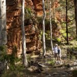 Flinders Ranges Walking Tour with Park Trek - Hikers admiring the sheer red cliffs by a creek