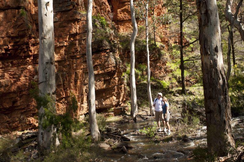 Flinders Ranges Walking Tour with Park Trek - Hikers admiring the sheer red cliffs by a creek