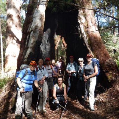Bibbulmun Walking Track - Guided Walk