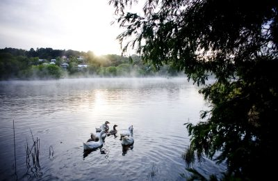 Lake Daylesford in the morning morning