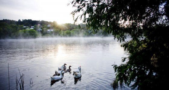 Lake Daylesford in the morning morning