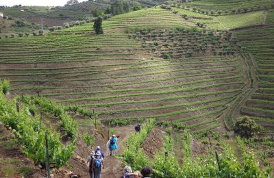 Portugal Duoro Valley Walking Tour - Hikers through a winery