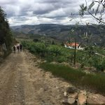Portugal Duoro Valley Walking Tour - Hiking downhill on an unsealed road