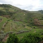Portugal Duoro Valley Walking Tour - Lush green hills of the winery
