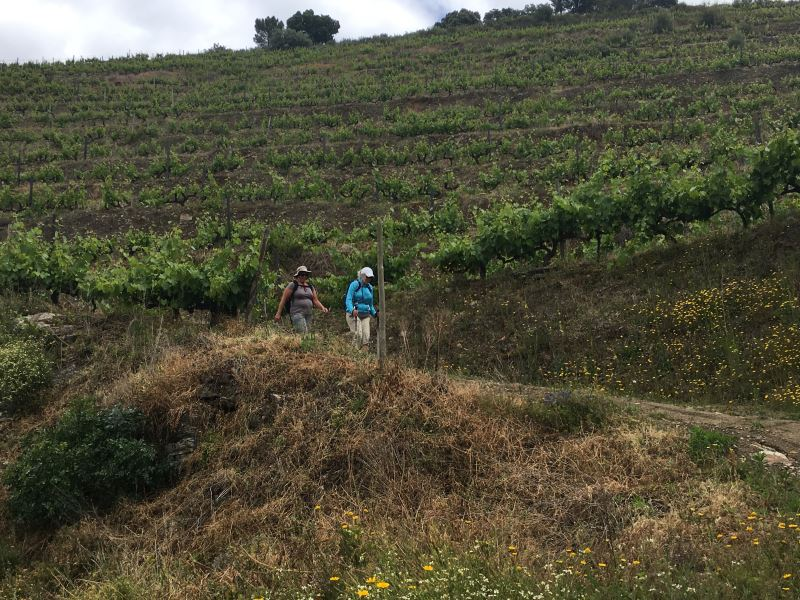 Portugal Duoro Valley Walking Tour - Strolling through a winery