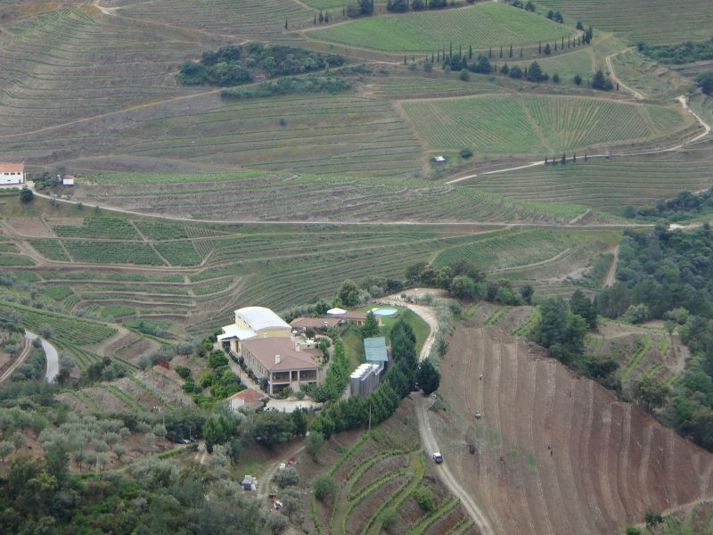 Portugal Duoro Valley Walking Tour - Terraced winery