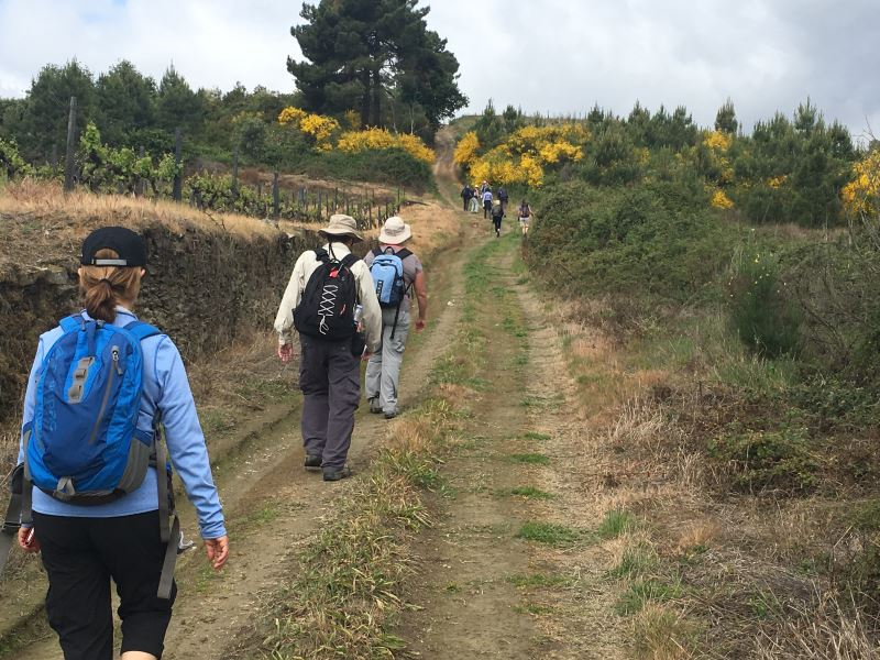 Portugal Duoro Valley Walking Tour - Walkers going past a winery