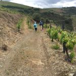 Portugal Duoro Valley Walking Tour - Walking past a winery