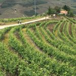 Portugal Duoro Valley Walking Tour - Walking through a winery