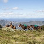 Horses being led in Victoria's high country