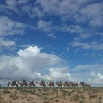 Camel train with big sky