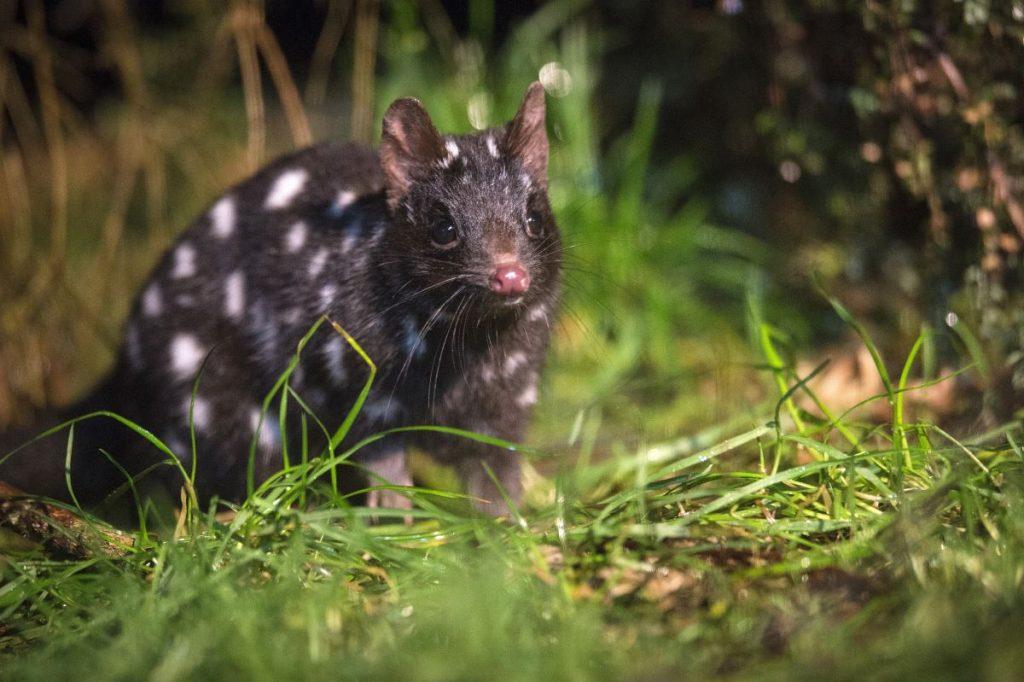 Tassie wildlife