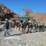 camel train with rocks