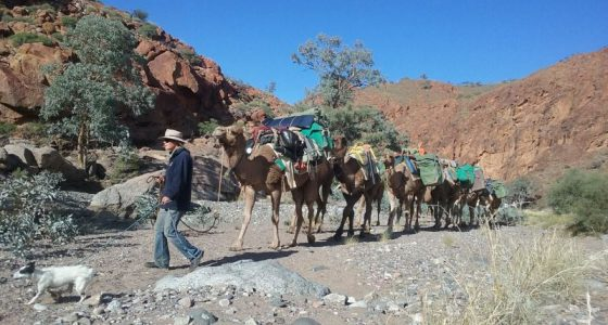camel train with rocks