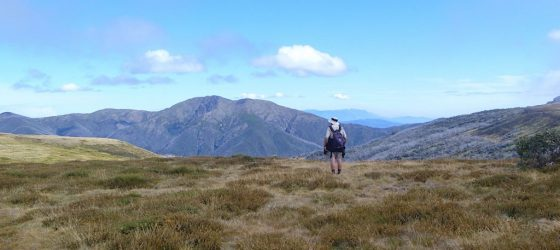 Looking across to Mt Feathertop