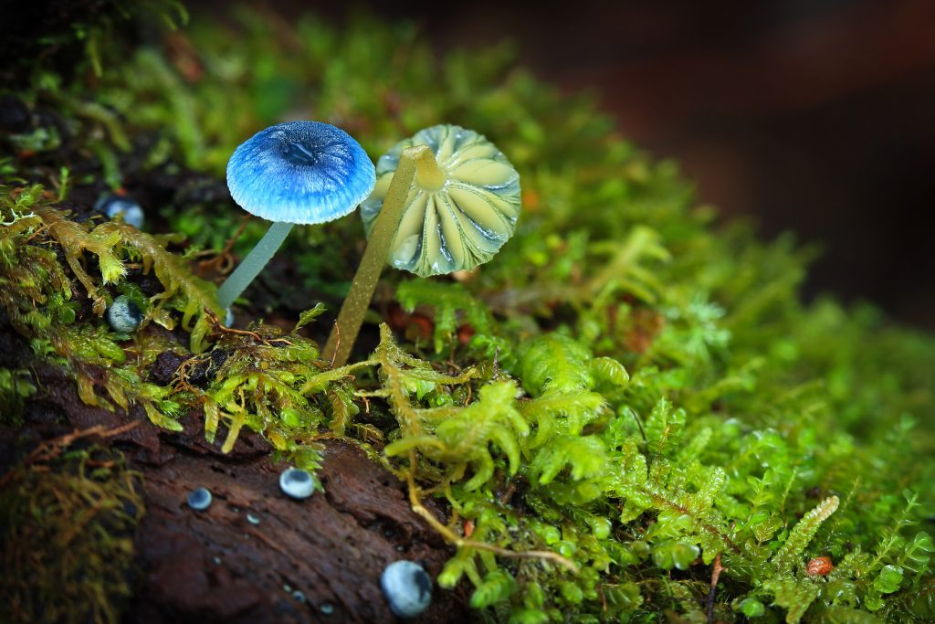 Autumn fungi - Tarkine walking tours Tasmania