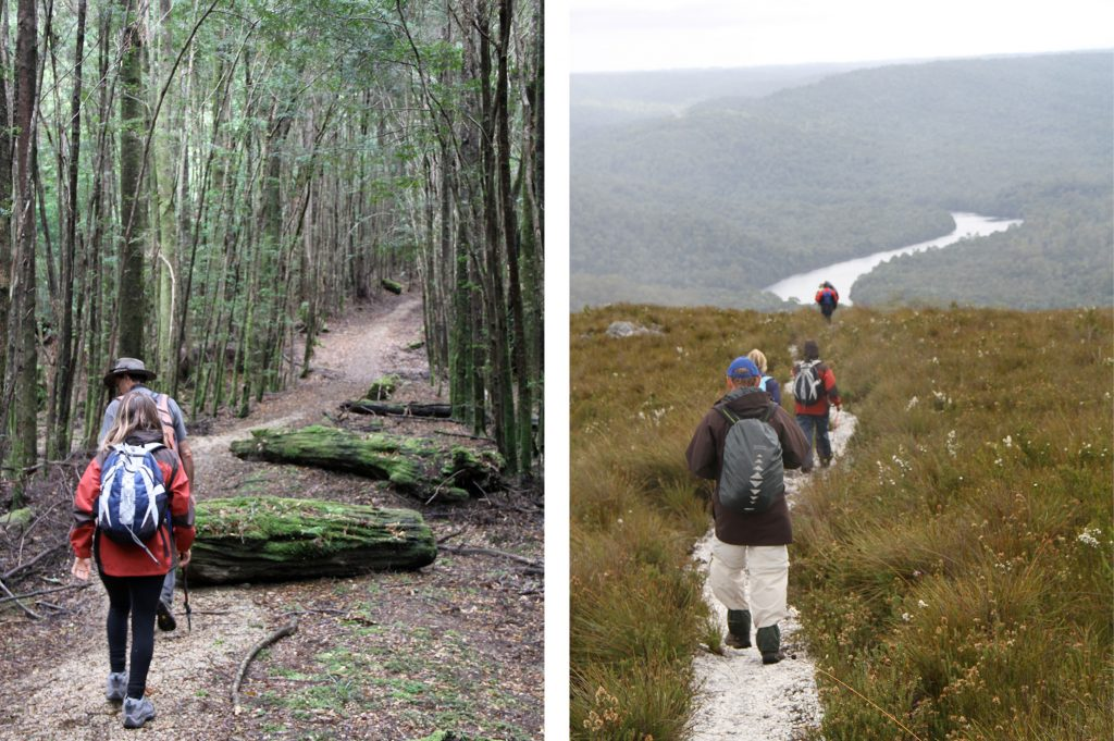 walkers - autumn in the tarkine - park trek walking tours Tasmania