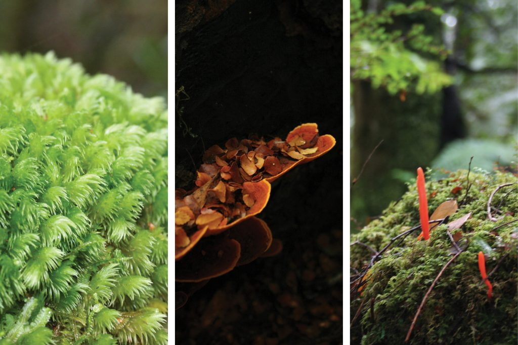 fungi - autumn in the tarkine - park trek walking tours Tasmania