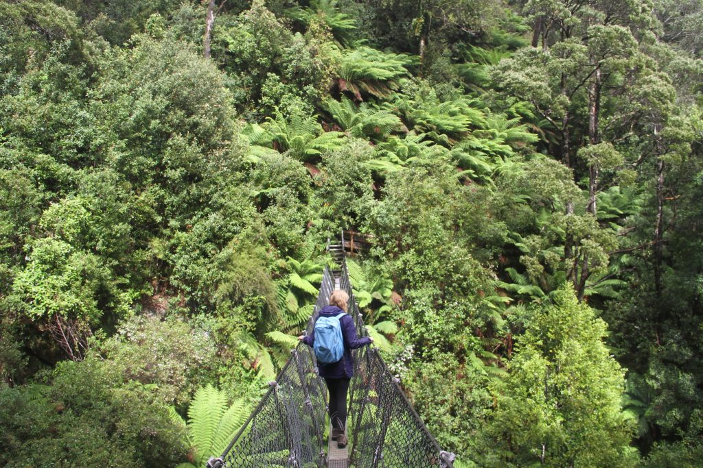 Tarkine walking tour with Park Trek